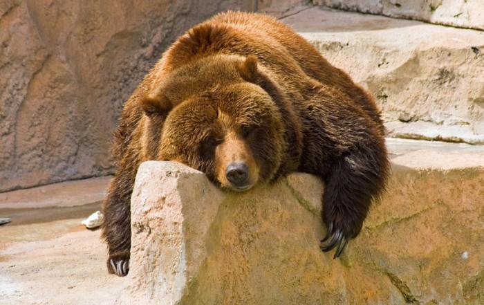 Bear with no mojo